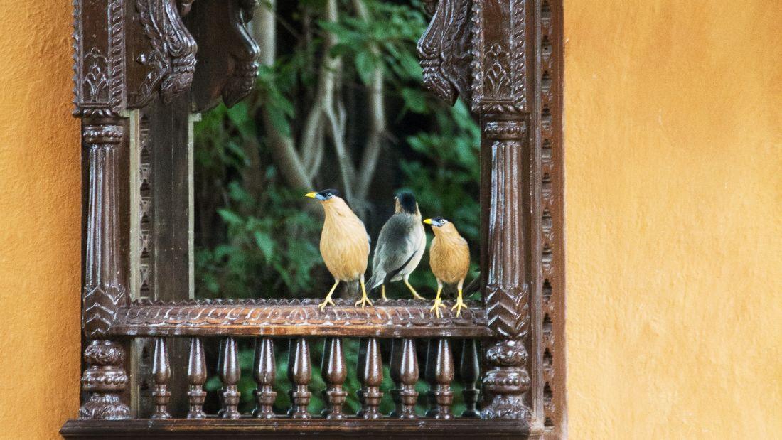 Bird Watching at Fort Jadhavgadh Heritage Resort Hotel Pune
