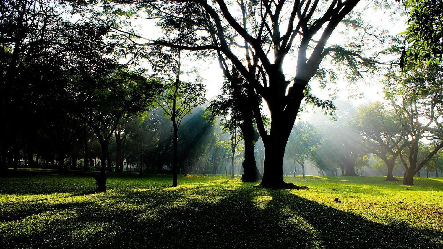 Cubbon Park, Bangalore Davanam Sarovar Portico Bangalore, Hosur Hotels in Bangalore