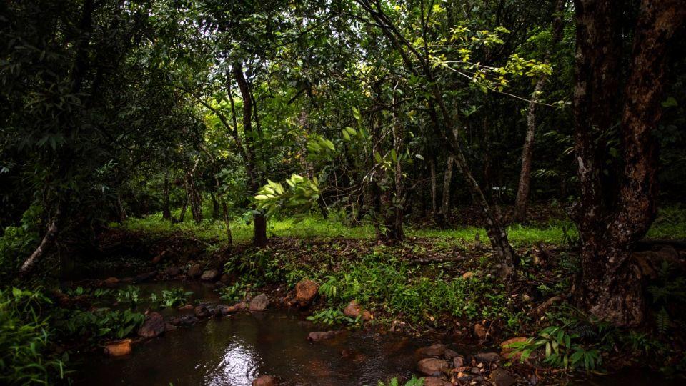 Rooms in Wayanad, Best Resorts in Wayanad, Nature Resorts in Vythiri 2