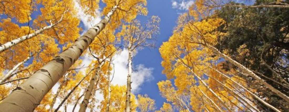Fall Blog 2