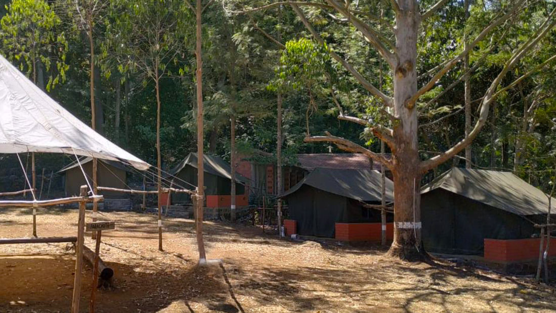 Let s Camp Yercaud tents 1