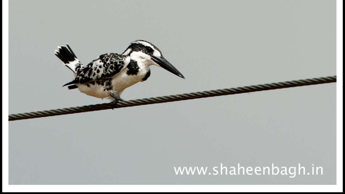 birds Shaheen Bagh Resort Best resorts in dehradun 2