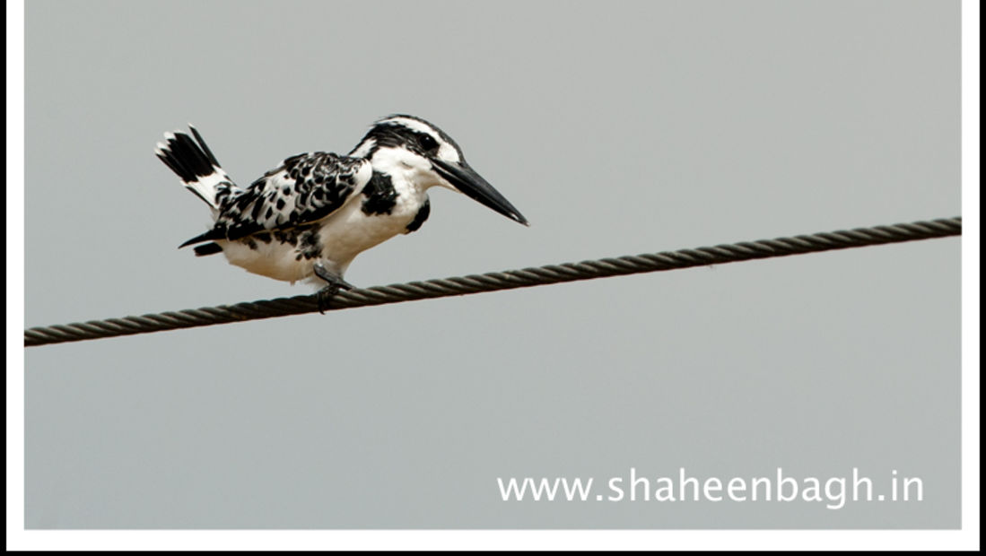 birds Shaheen Bagh Resort Best resorts in dehradun 2