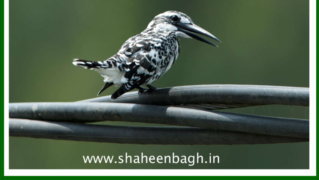 birds Shaheen Bagh Resort Best resorts in dehradun 8