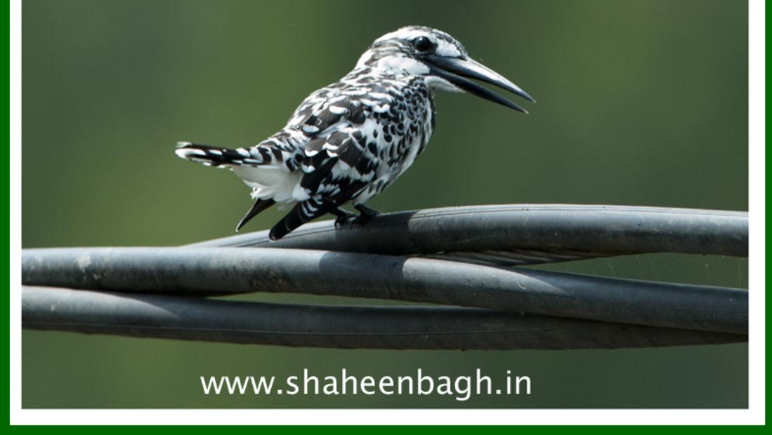 birds Shaheen Bagh Resort Best resorts in dehradun 8