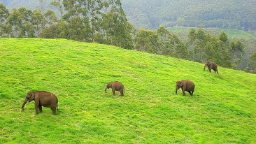 Elephant Junction Summit Hampton Hotel Thekkady