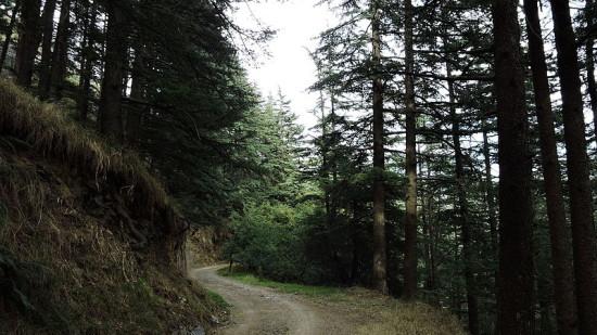 Shimla Wildlife Sanctuary Summit Hotels and Resorts Mashobra