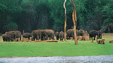 Periyar National Park Thekkady