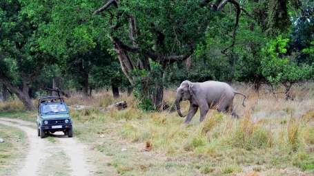 Jeep Safari adventure at Wild Brook Retreat, Rajaji National Park