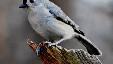 white-and-blue-bird