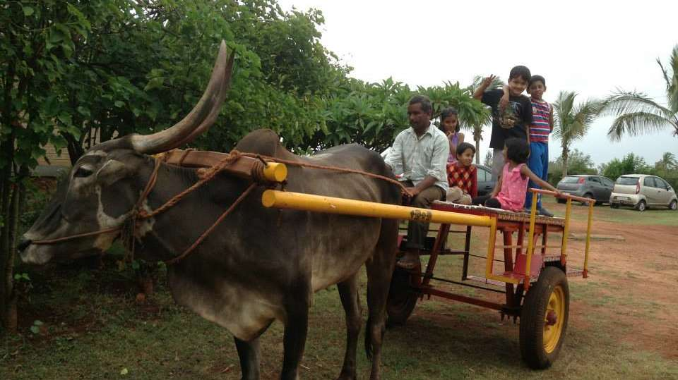 Bullock Cart Driving License at Our Native Village - Resorts near Bangalore Airport 99
