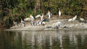 Ranganathithu-bird-sanctuary