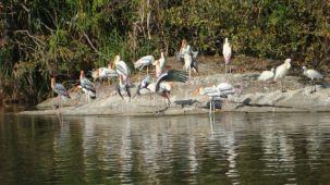 Ranganathithu-bird-sanctuary