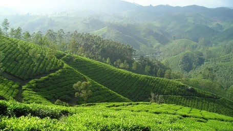 Tea Farm, Summit Hotels & Resorts, Unique Experiences by Summit