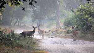 Chevron Hotels  Spotted deers in Jim Corbett National Park