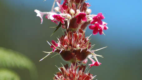 Yamunotri, Gangotri, Kedarnath & Badrinath uttarakhand CharDham-FlowersInBloom