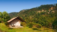 The Forrest, Rajaji National Park Rishikesh  MG 3439