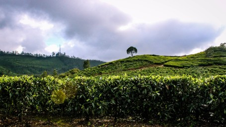 Top Places to visit in Kerala, Revisit Kerala, Sarovar Hotels