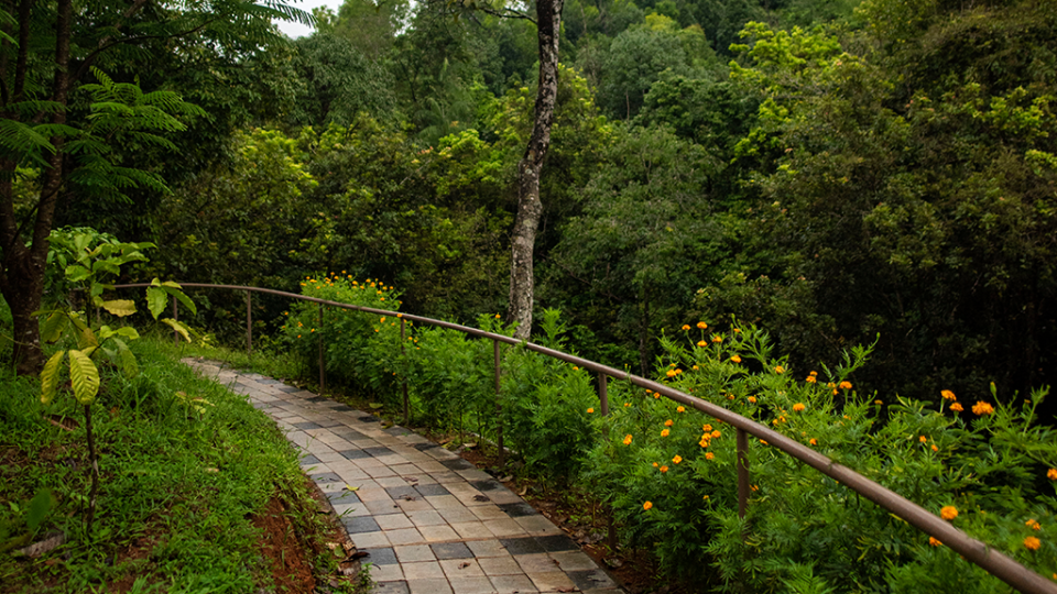 Rooms in Wayanad,  Best Resorts in Wayanad, Nature Resorts in Vythiri 36