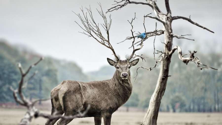 animal-antler-antlers-blur-219906