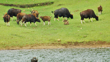 Thekkady Hotels Summit Hotels in Thekkady Thekkady Attractions 3