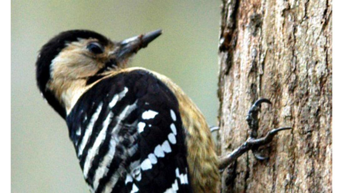 birds Shaheen Bagh Resort Best resorts in dehradun 22