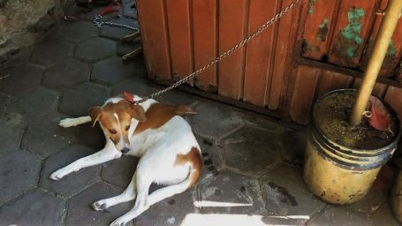 Solana Boutique B&B Zihuatanejo Zihua Animal shelter