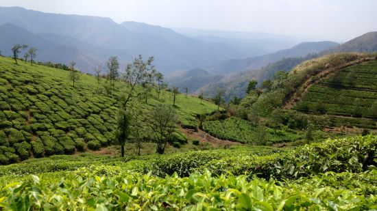 Lock Heart Tea Factory, Things To Do In Munnar