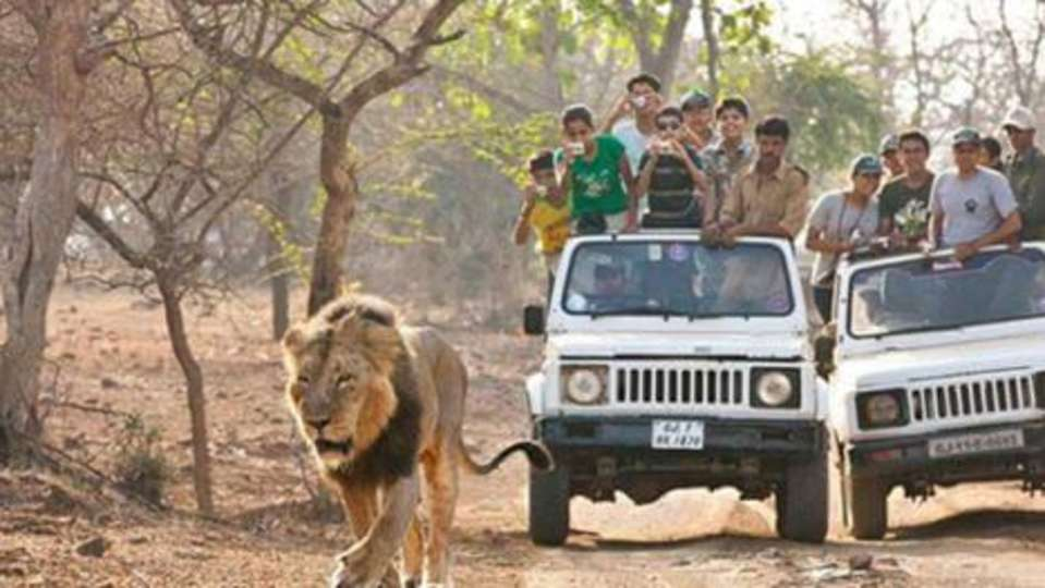 Bannerghatta-National-Park-lion-safari, Davanam Sarovar Portico Bangalore