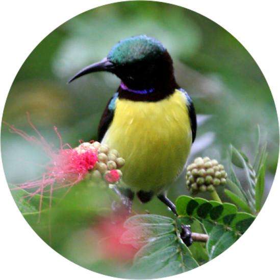 Bird Watching, Amanvana Resort And Spa, Coorg Resort 111