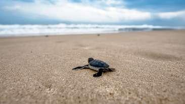 turtle-2201433 1920