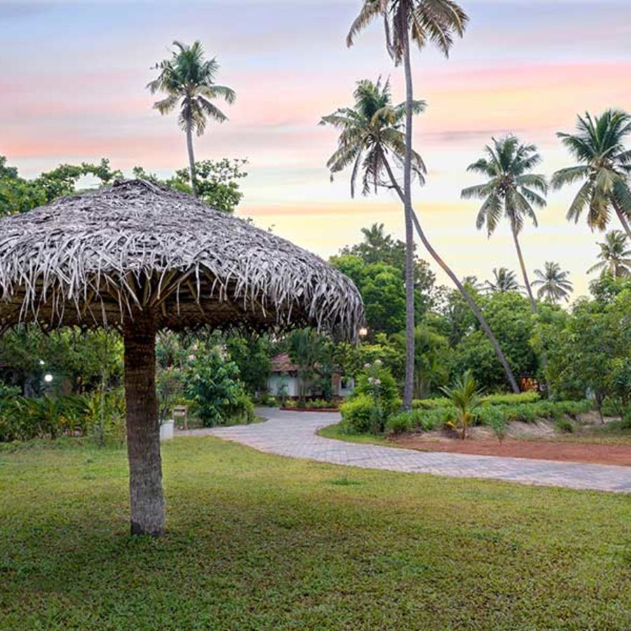 alt-text abad-turtle-resort-garden-hut-greenery, Contact Beach Resort in Marari, Beach resorts in Allepey, 4 Star Resorts in Alleppey, Best Beach Resorts in Alleppey, Best Beach Resorts Near Cochin, Beach Resorts in Kerala