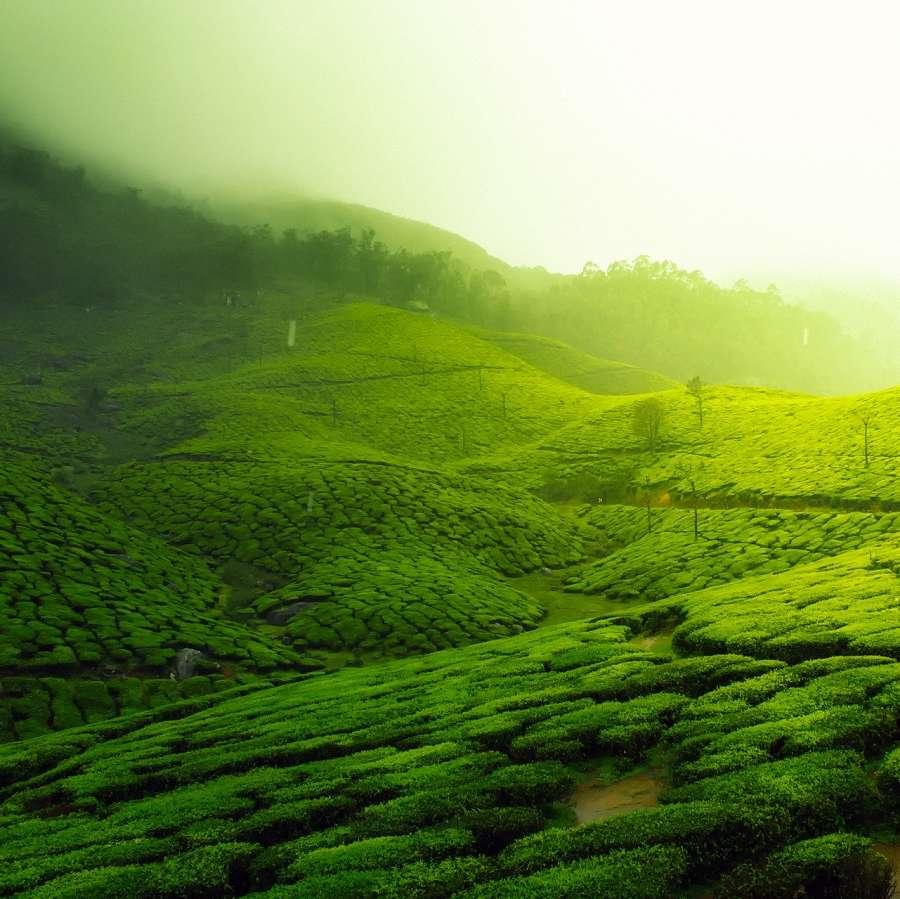 alt-text tea-plantation-2220475 1920
