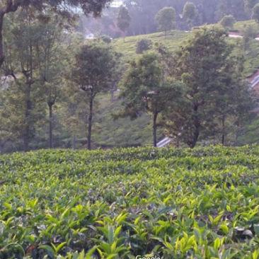 brooklands-tea-factory 3