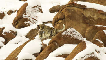 snow leopard expedition at Reni Pani Jungle Lodge in Hoshangabad