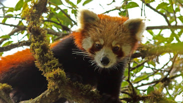 Red Panda Expedition at Reni Pani Jungle Lodge in Hoshangabad 2