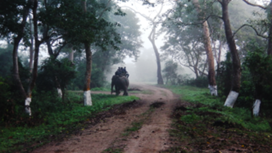 Hotel in Kaziranga, Summit Green Village, kaziranga wildlife safari11