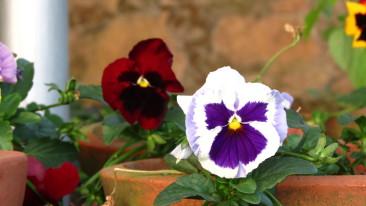 Rose Garden Munnar, Summit Hotels & Resorts