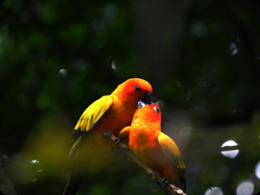 Birds of Malnad