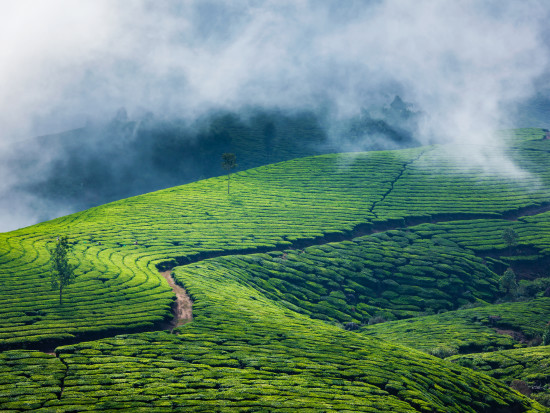 Darjeeling-Munnar Summit Hotels Resorts