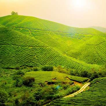 Central Hotels  Tea Excursion Central Hotels Darjeeling
