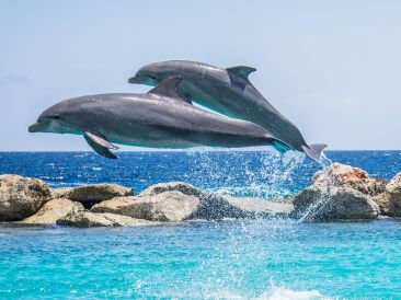 dolphins-906175 1920