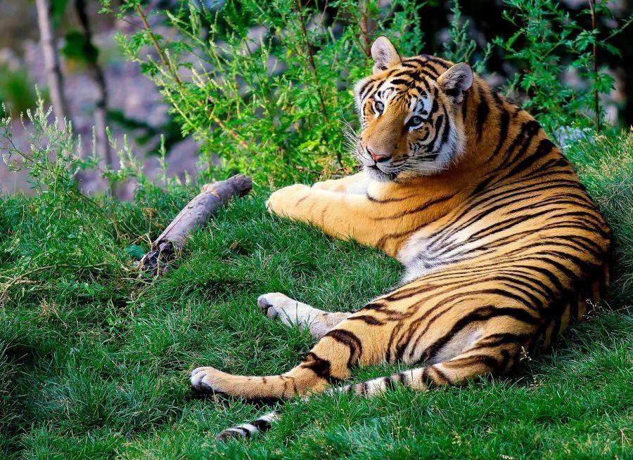 alt-text Rosa Bandhavgarh Meadows Tiger Safari Lodge, Bandhavgarh Jungle Lodge, Bandhavgarh Resort 34