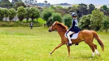 Horseback-Riding post 0