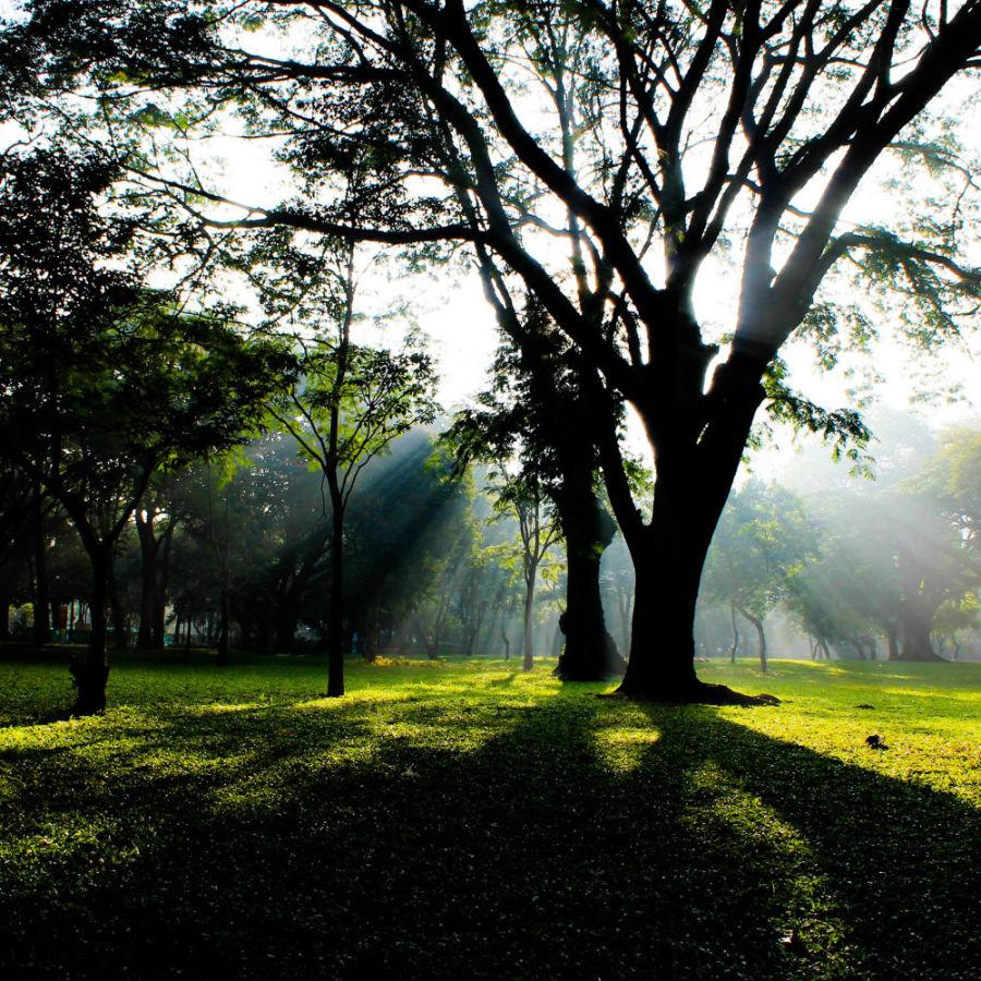 Cubbon Park  Bangalore lrtpsg