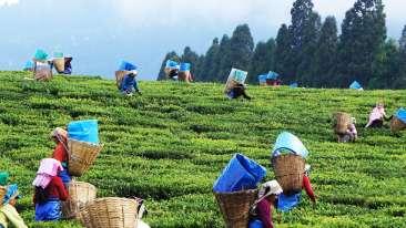 happy valley tea estate Summit Yashshree Suites and Spa Darjeeling hdiqfp