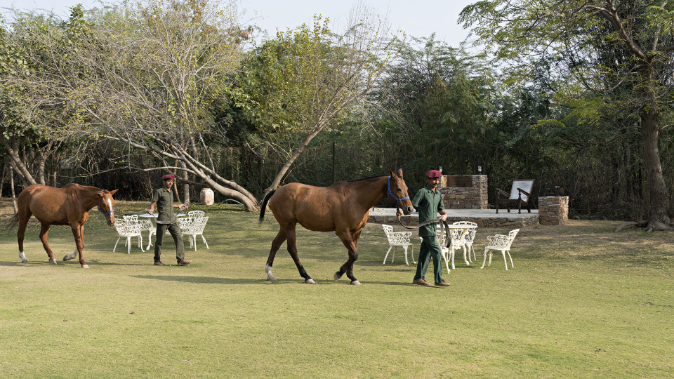 Polo Ponies 4