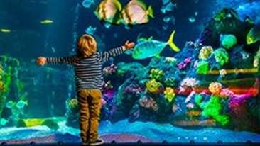 Black Thunder Water Theme Park - Aquarium