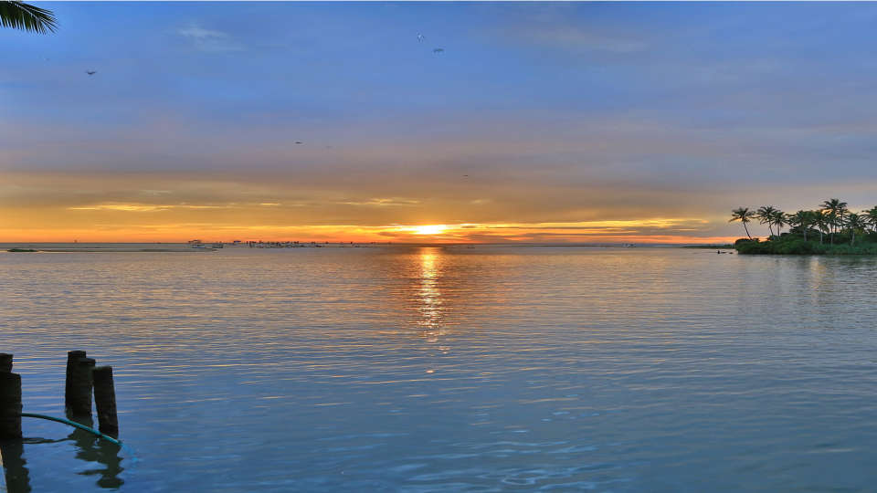 Estuary Poovar Island 37