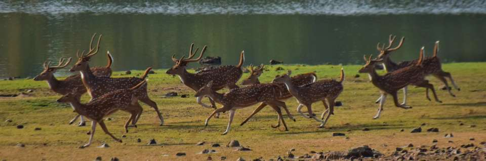 wildlife, wildlife near kanha national park. asteya kanha resort
